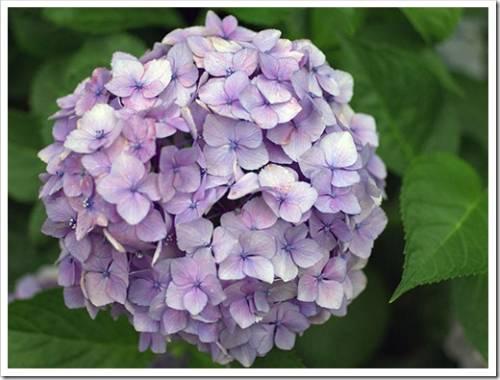 Основные причины отсутствия соцветий