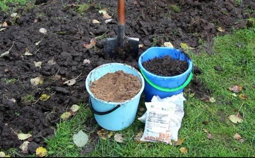 Какие удобрения вносить осенью под чеснок