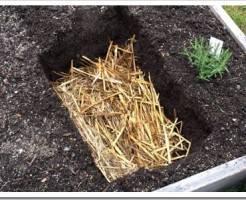 Как сажать семена огурцов?