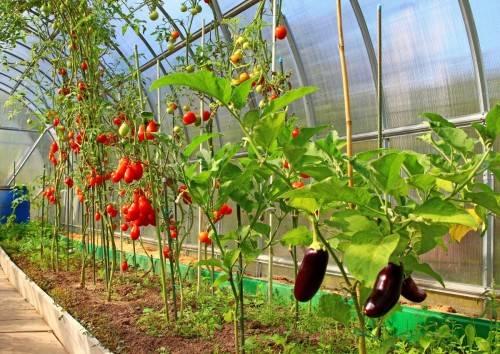 выращивание овощей в теплице
