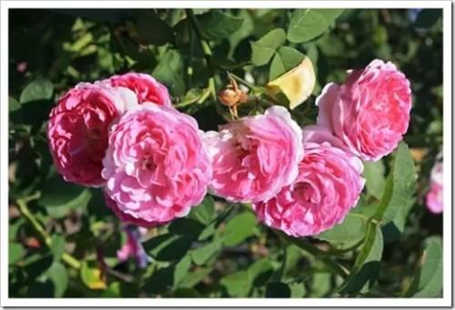Главные критерии насыщенного цветения