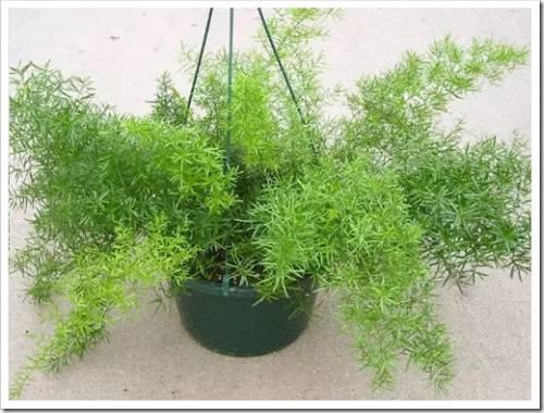 Почему выращивать комнатные растения из семян лучше, чем купить уже готовые?