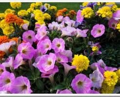 Садовые цветы. Какие цветы сажать на даче. Топ-5