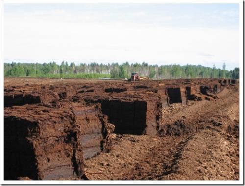 Типы почвы, которые нуждаются в торфе