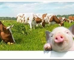Виды кормов для сельскохозяйственных животных