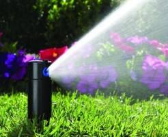 Как часто нужно поливать газон
