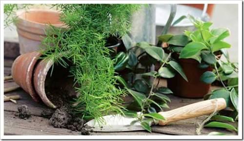 Показавшиеся корни свидетельствуют о возможной скорой гибели растения