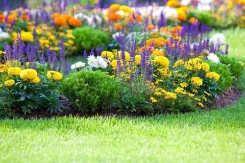 Какие цветы посадить на клумбе