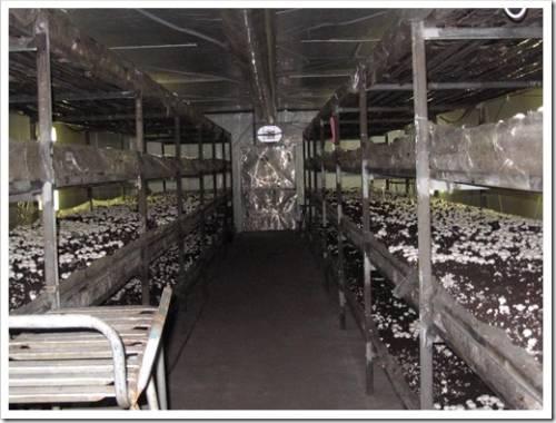 Высадка грибницы