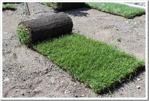 Подготовка поверхности под рулонный газон