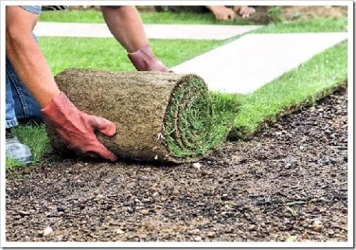 Настил рулонного газона и его полив