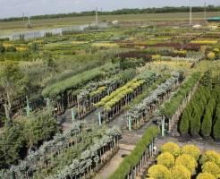 Что такое питомник растений