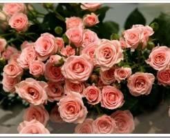 Купить кустовые розы. Купить букет цветов с доставкой.