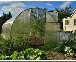 Выращивание овощей в теплице — это наличие в доме натуральных продуктов