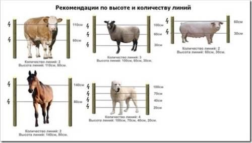 Электропастух для крупного рогатого скота