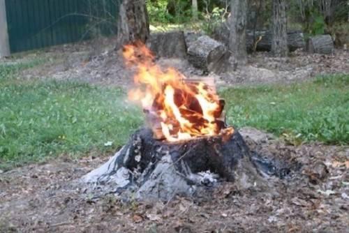 Как удалить пеньки от деревьев химическим способом