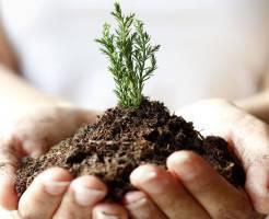 Что такое растительный грунт
