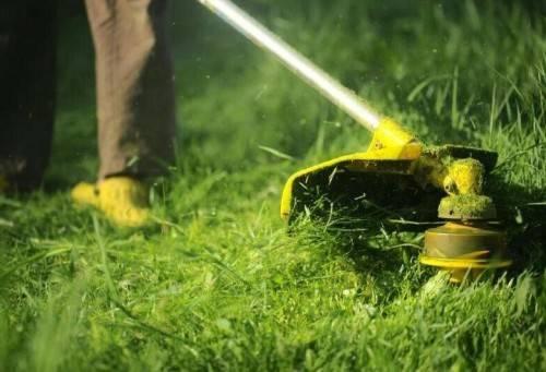Как сделать газон на заросшем участке
