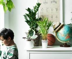Какие комнатные растения полезно держать дома
