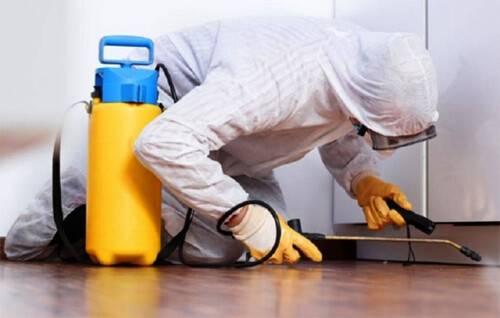 Как проходит дезинфекция квартиры от тараканов