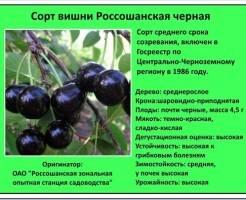 Обзор лучших сортов вишни для выращивания в саду