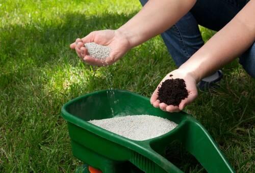 Чем удобрять газон