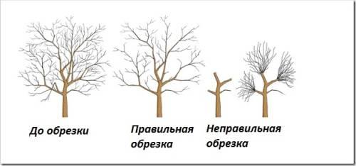 joagdovv