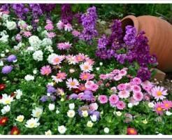 Какие цветы-однолетники посадить на даче