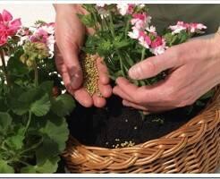 Какие удобрения нужны для комнатных растений?