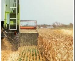 Покупка эффективных пестицидов по доступной стоимости