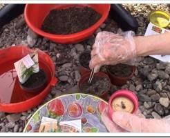 Как выращивать семена комнатных растений