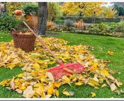 Что делать с газоном осенью