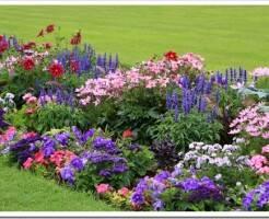 Какие семена цветов можно посеять осенью?