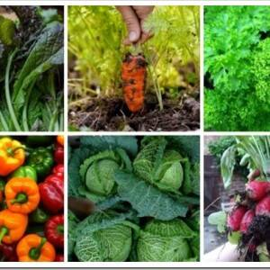 Какие овощи можно посадить на даче
