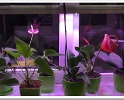 Как выбрать искусственное освещение для цветов