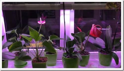 искусственное освещение для цветов