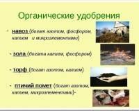 Что такое минеральные и органические удобрения