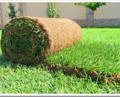 Проблемы выбора хорошего рулонного газона - что нужно знать