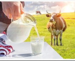 Полезно ли коровье молоко для детей и какая есть опасность