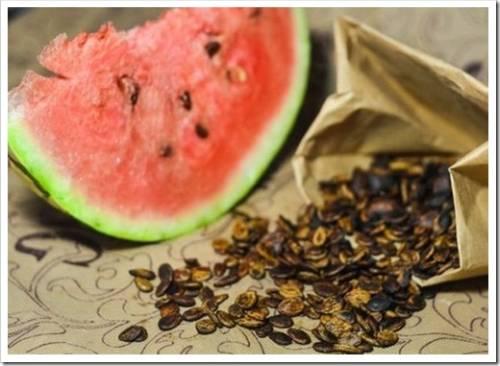 Посадка арбузных семян