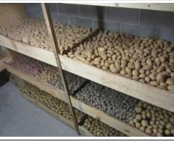 Как хранить картофель в домашних условиях зимой