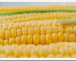 Топ-4 интересных фактов о сахарной кукурузе, которых вы не знали
