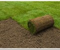10 советов, как укладывать рулонный газон