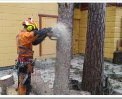 Как делается удаление опасных деревьев