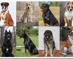 Какую породу собак выбрать для частного дома