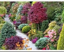 Виды декоративных кустарников и как выбрать саженцы