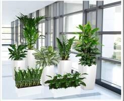 Что такое озеленение офисов