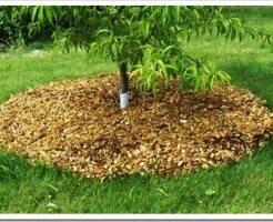 Что такое мульчирование деревьев и кустарников и как оно выполняется?
