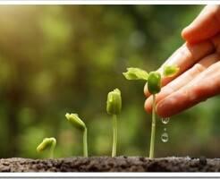 Агротенс супер удобрение