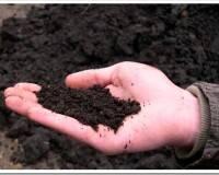 Торф и торфосмеси для растений - для чего нужен и как использовать